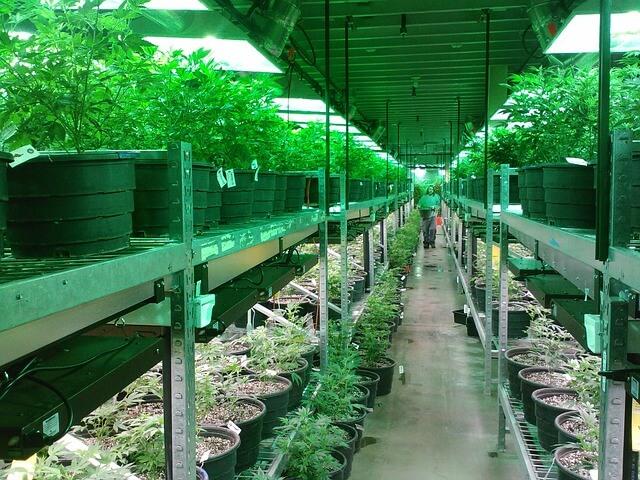 cannabis dispensary visit tips