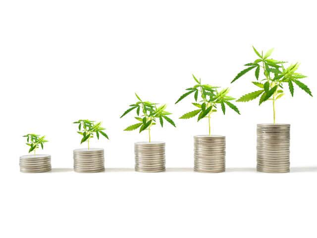 cannabis seed to sale