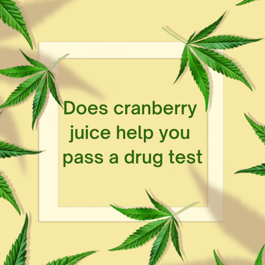 Does cranberry juice help you pass a drug test